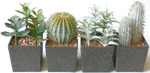 table top mini cactus