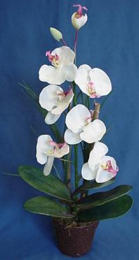 phalaenopsis artificial orchid plant