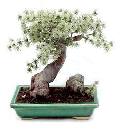 Bonsai Artificial pine artificial bonsai